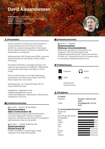 Software Developer [swedish] Systemutvecklare